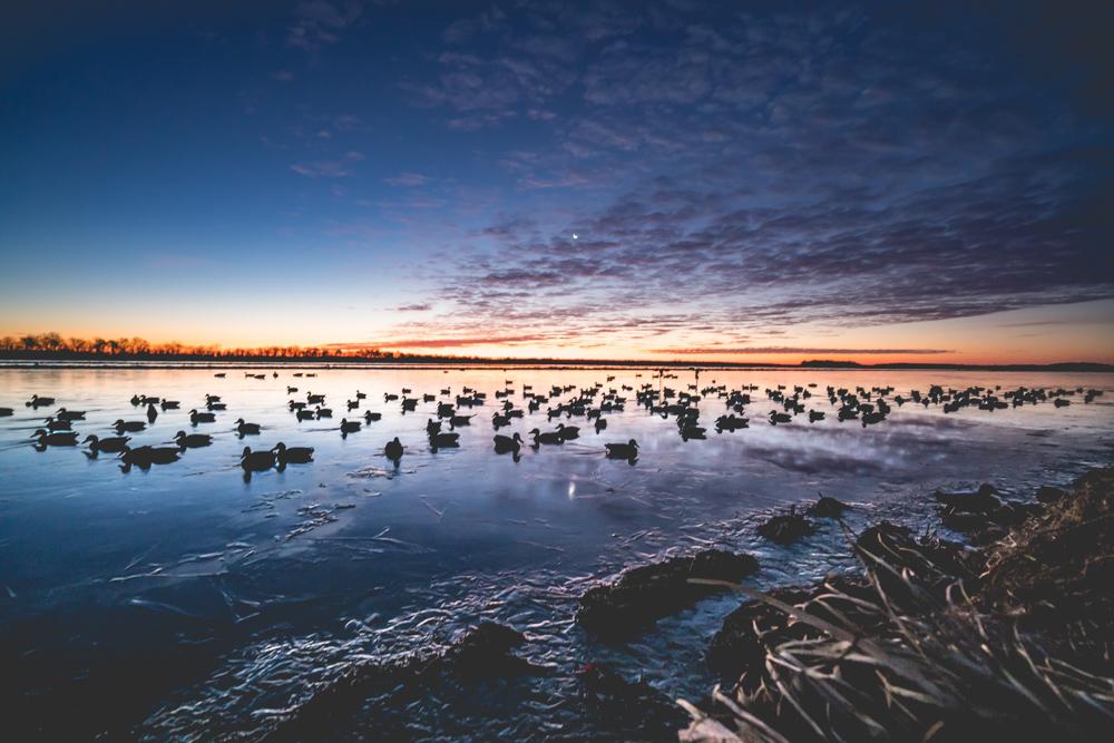 Waterfowl Hunts